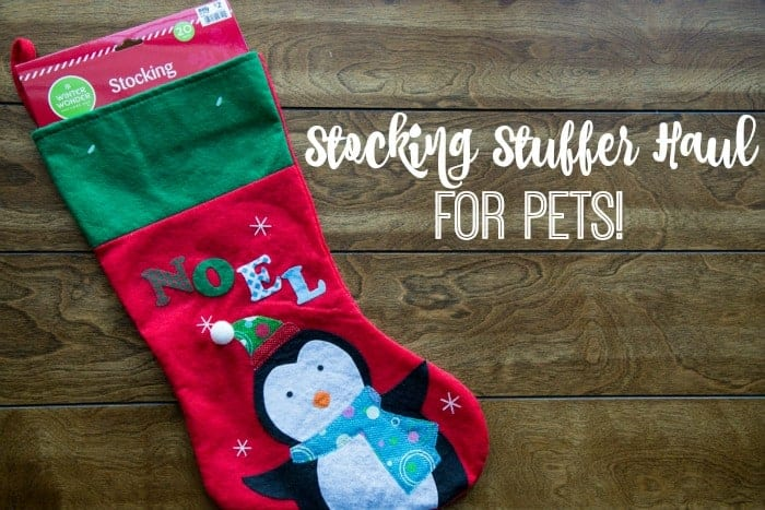 Big Lots Stocking Stuffer Haul For Pets