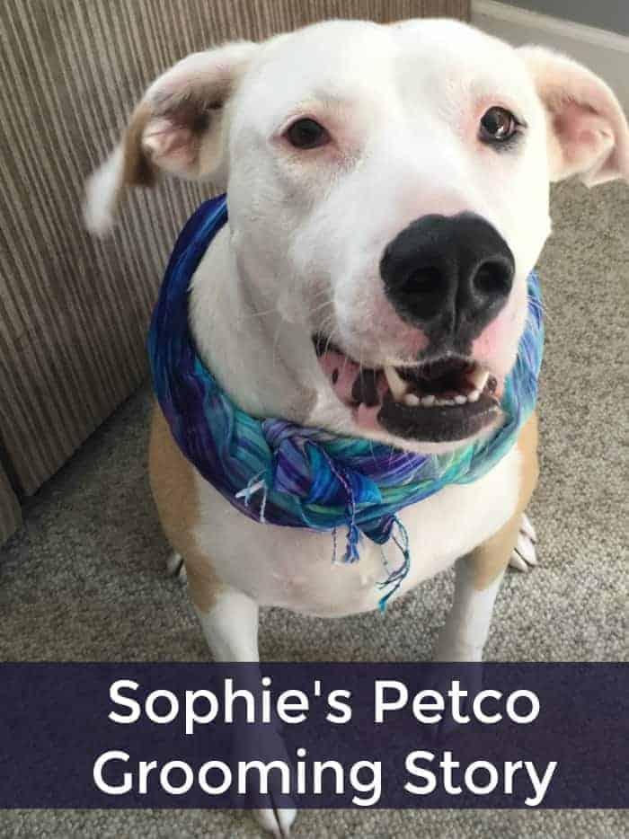 Sophie's Petco Grooming Story