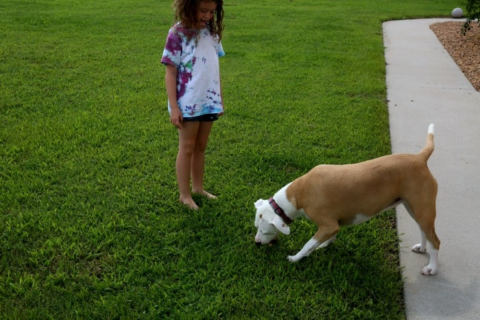5 Tips To Keep Your Pet Fit This Summer