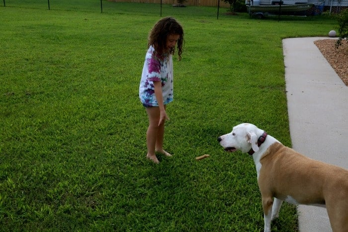 -Keep Your Pet Fit This Summer